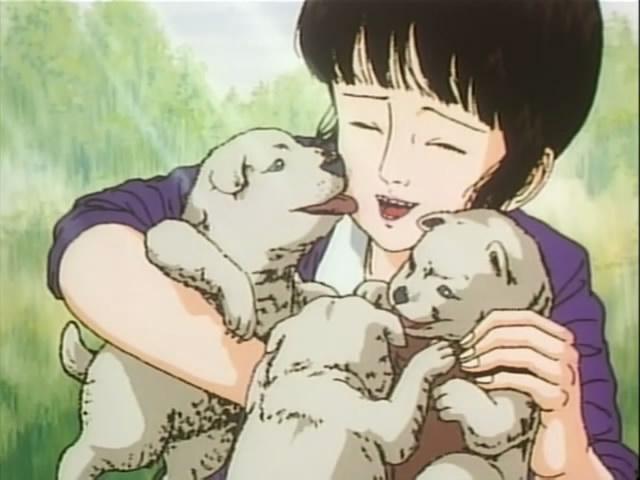 Midori | Puppies